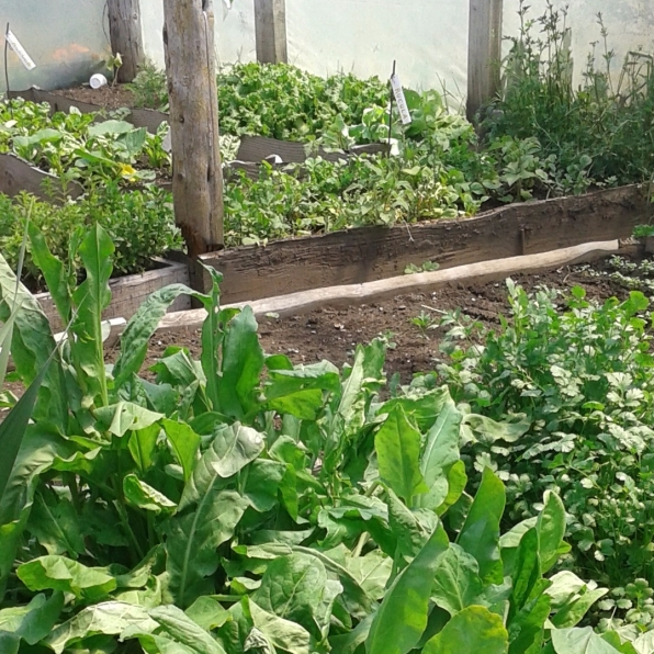 Huerta Organica2